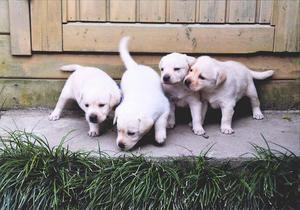 4匹の子犬修正済.JPG