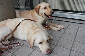 今回の訓練犬たち.JPG