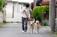 二頭の犬と歩く様子.jpg