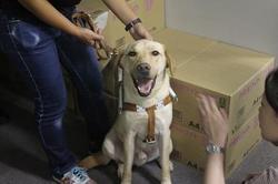 訓練犬奇跡のカメラ目線.JPG
