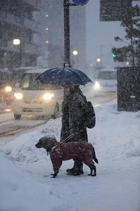 雪道で信号を待っている写真.JPG